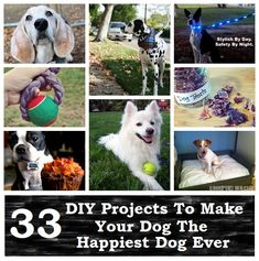 33 DIY Projects To Make Your Dog The Happiest Dog Ever
