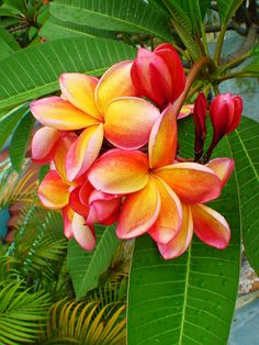 Beautiful Tropical Flowers inspiration 4 Spring Summer 2012 Fashion Prints    Photo Source: http://www.flickriver.com/photos/tags/tropical+flowers/interesting/