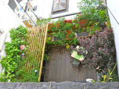 Small Space & Innovative Gardening