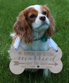 Another great find on #zulily! Personalized 'Save The Date' Pet Sign #zulilyfinds