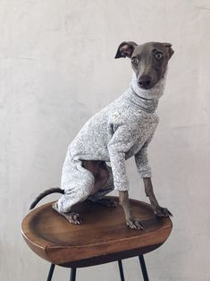 italian greyhound and whippet clothes / iggy clothes / Dog Sweater / ropa para galgo italiano y whippet/ LIGHT GRAY JUMPSUIT Underwear, Italian Greyhound, Whippet, Warm And Cozy, Spring, Etsy, This Or That Questions, Dogs, Jumpsuits
