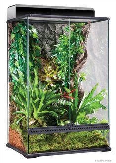 The Exo Terra Glass Terrarium is the ideal reptile or amphibian housing designed by European herpetologists. The front opening doors allow easy access for ma. Terrarium Diy, Lizard Terrarium, Terrarium For Sale, Glass Terrarium, Crested Gecko Habitat, Lizard Habitat, Geckos, Exo, Aquaponics Fish