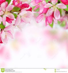 pictures of flowers background