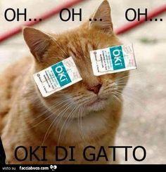 2li7qgodyh-oki-di-gatto-bestiaccia_b.jpg (544×565)