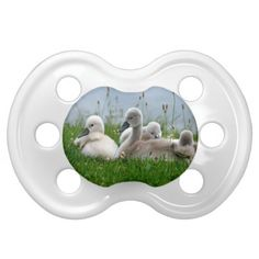 Shop Cute Swan Babies in the Grass Pacifier created by stdjura. Cute Baby Gifts, Cute Babies, Swan, Grass, Herb, Swans, Grasses, Funny Babies, Cute Kids