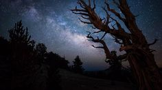 Sentinel of the Night | Flickr - Photo Sharing!