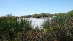 Laguna en la Fao