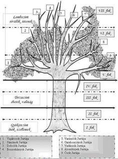 Az Álomfogó világa - a Világfa - Beholder Fantasy Tree Of Life, Hungary, Mandala, Novels, Dandelion, Mood, Fantasy, Flowers, Plants