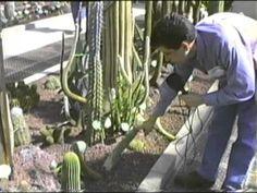 Cactus y suculentas jardín botánico Madrid