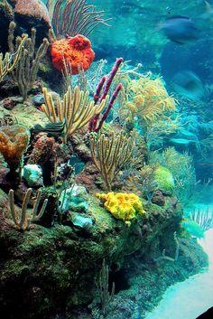 Underwater Art, Underwater Creatures, Ocean Creatures, Underwater Photography, Film Photography, Street Photography, Landscape Photography, Nature Photography, Fashion Photography