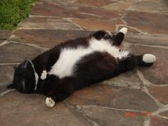 """sleepy head"" Fezzywig Sleepy Head, Cat Sleeping, Like Animals, Fat Cats, Kitty, Lazy, Dogs, Frases, Gatos"