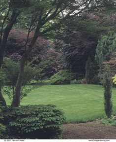 A Bold Border of Trees and Shrubs - FineGardening