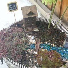 This is my fairy garden.  I have a bit more work to do but wanted to post a few pictures