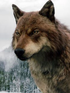 Jacob Black as a Werewolf in the movie Breaking Dawn pt. Twilight Wolf Pack, Jacob Black Twilight, Twilight Saga Series, Twilight Movie, Vampire Twilight, Jacob And Renesmee, Twilight Breaking Dawn, Breaking Bad, Twilight Pictures