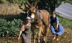Amish girls plowing with mule power. Some church districts do not allow mules, as they believe the offspring of a horse and a donkey is unnatural