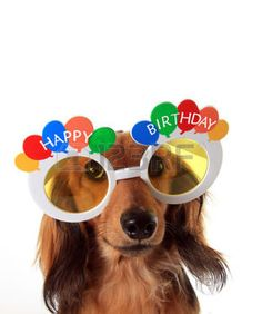 Photo about Dachshund puppy wearing Happy Birthday glasses. Happy Birthday Dachshund, Happy Birthday Puppy, Funny Happy Birthday Song, Cute Birthday Wishes, Happy Birthday Video, Happy Birthday Wishes Quotes, Happy Birthday Flower, Happy Birthday Pictures, Birthday Messages