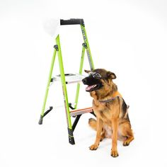 Ladder Safety: if even a dog can do it, so can you! Toolbox, Ladder, Safety, Dogs, Tool Box, Security Guard, Stairway, Pet Dogs, Doggies