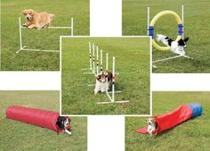 Dog Agility Training Instructions from http://www.gardenmore.co.uk/blog/dog-agility-training-instructions.html