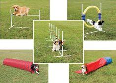 dog backyard equipment | Dog Agility Supplies & Equipment Dog Agility Training Package, Dog ...