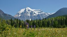 Mount Robson (3954m) is the highest point the Canadian Rockies. It is located entirely within Mount Robson Provincial Park of British Columbia. We were told by our tour host we were fortunate on the day we visited as the peak is cloud covered most of the time. The field of wildflowers in the foreground and strand of trees midground provided an awe-inspiring view.