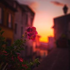 Last lightsof day #sun #flower #violet #sunlight #sunset #beautiful #twitter #instagood #sunset #evening #colorful #win #winner #looking #photomanipulation #instapic #influencer #fashionblogger #travelblogger #followme #travelinfluencer #500px View my portfolio on http://ift.tt/xmAcR4