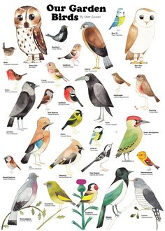 Bird garden Illustration - Matt Sewell Our Garden Birds Gravure Illustration, Bird Illustration, Love Birds, Beautiful Birds, Beautiful Artwork, Backyard Birds, Garden Birds, Bird Identification, Bird Poster