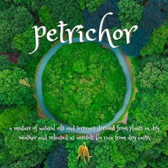 beautiful words from Macquarie Dictionary - petrichor - a mixture of natural oils and terpenes derived from plants in dry weather and released as aerosols by rain from dry earth Natural Oils, Beautiful Words, Rain, Language, Weather, Earth, Outdoor Decor, Nature, Plants