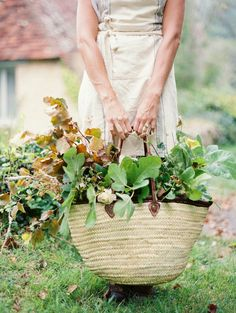 {<3} this is how I like to gather greenery for the house