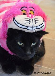 Disney Pet Costumes Exclusively at PetSmart #toocute #pets #Disney