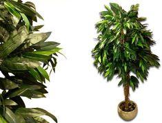 Vásárlás: Garthen Műnövény - Mangófa 180 cm Művirág árak összehasonlítása, Műnövény Mangófa 180 cm boltok Plant Leaves, Plants, Plant, Planets