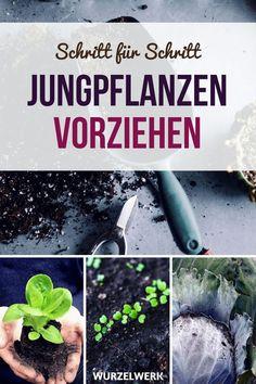 Aussaat Pflanzen Im Februar Beispiel Gartenplan Gartenfreunde