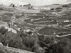 Jerusalem - American Colony and Eric Matson collection (Life in the Holy Land) City of David from southwest