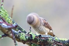 TYWKIWDBI (Tai-Wiki-Widbee): nature