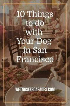 Is San Francisco dog-friendly? Get 10 dog-friendly activities on what to do with your dog in San Francisco. #howtoflywithyourdog #howtotravelwithyourdog #travelingwithdogonplane #flywithdogstips #dogflight #dogflighttips #dogflightcarrier #internationalflightwithdog #longflightwithdog #dogcarrier #dogtravelbag #dogtravelessentials #travelerwithdog #flywithdogtips #dogtips #dogownertips #shouldyourtravelwithyourdog #whyyoushouldtravelwithyourdog #travelingyorkie #yorkietravel #yorkietravelbag Comfy Dog Bed, Great Places To Travel, Dog Organization, Flying Dog, Dog Area, Dog Travel, Dog Carrier, Outdoor Dog, Travel Essentials