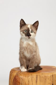 Meet Fritter! One of two kittens adopted this past weekend.