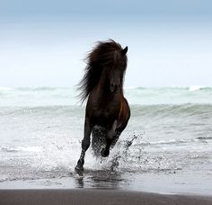 Icelandic Horse by Ragnar Sigurdsson on Flickr
