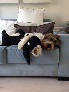 Bedtijd Petit Basset Griffon Vendeen, Griffon Dog, Mans Best Friend, Best Friends, Animals And Pets, Cute Animals, Dachshund Love, New Puppy, I Love Dogs