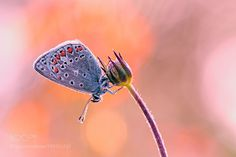 Butterfly... by Cobra65