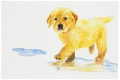 Rainbow Card Company 25-Pack Postcards - Puddles - http://www.thepuppy.org/rainbow-card-company-25-pack-postcards-puddles/