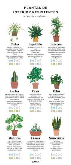 Indoor Garden, Garden Plants, Indoor Plants, House Plants Decor, Plant Decor, Plantas Indoor, Plante Carnivore, Plants Are Friends, Green Life