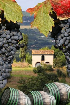vineyard in Chianti, Tuscany, Italy. Love the composition of this photo. (Liking the barrels of Chianti, too! Under The Tuscan Sun, Places To Travel, Places To See, Places Around The World, Around The Worlds, Beautiful World, Beautiful Places, In Vino Veritas, Tuscany Italy