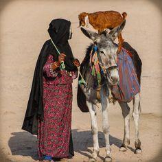 500px / Photo Egypt donkey by Bernd Rechberger