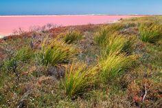 Ein See, so rosa wie Zuckerwatte: Der Pink Lake in Australien ist ein 600 Meter langer pinkfarbener See auf der Insel Middle Island. Dieses ...