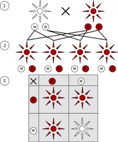 Dominant and recessive phenotypes. (1) Parental generation. (2) F1 generation. (3) F2 generation.