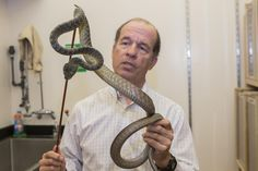 Expert unlocks mechanics of how snakes move in a straight line University Of Cincinnati, Biologist, Nature Study, Snake, Southern, Africa, Train, Journal, Natural History
