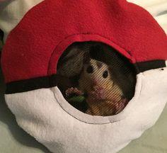 Pokemon pokeball sugar glider bonding pouch with back zipper and mesh window.