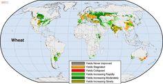 El rendimiento de las cosechas en el mundo
