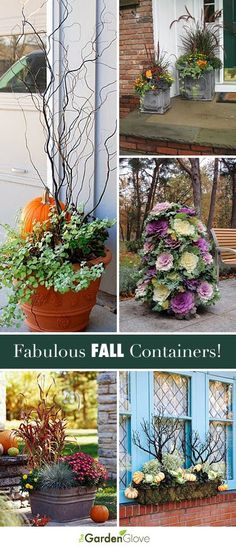Fabulous Fall Containers • Great Tips and Ideas!