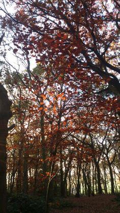 Storton Woods November 15 2012