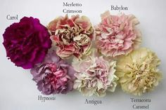 Antique-hued carnations, available from Florabundance, Inc.